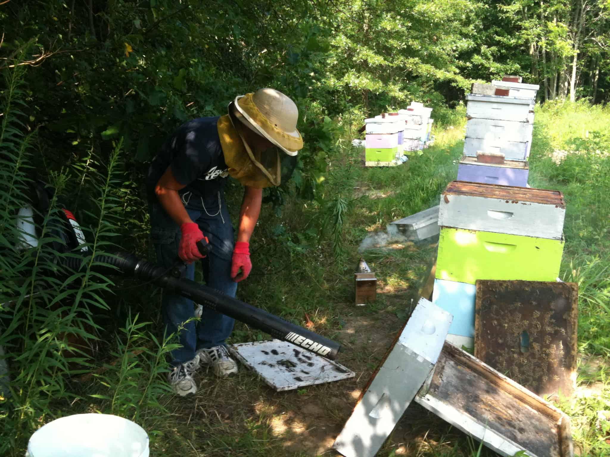 Honey Harvest 2010!