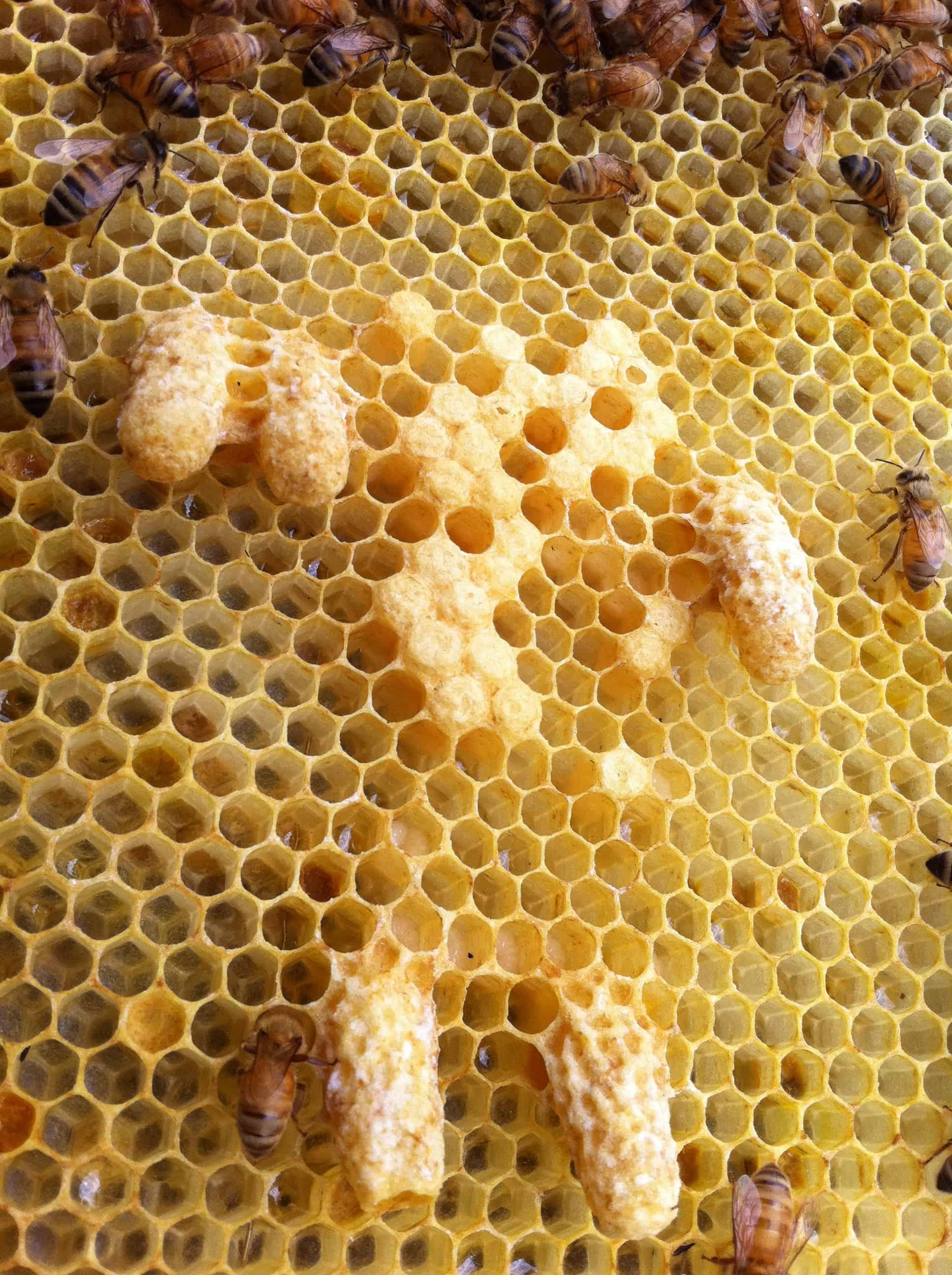 making splits and queens hudsonville honey