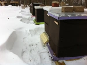 Hives amid the drifts on Feb 23, 2012.