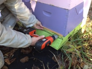 We always insert entrance reducers in preparation for the winter months.  Use them when your feeding your bees as well to help prevent robbing.