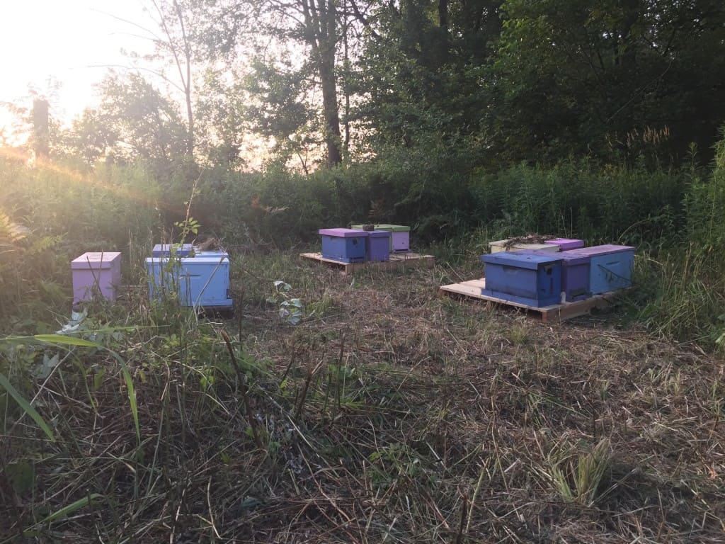Make up your nucs later in the day and move them to a new location at dusk or later to avoid drifting.