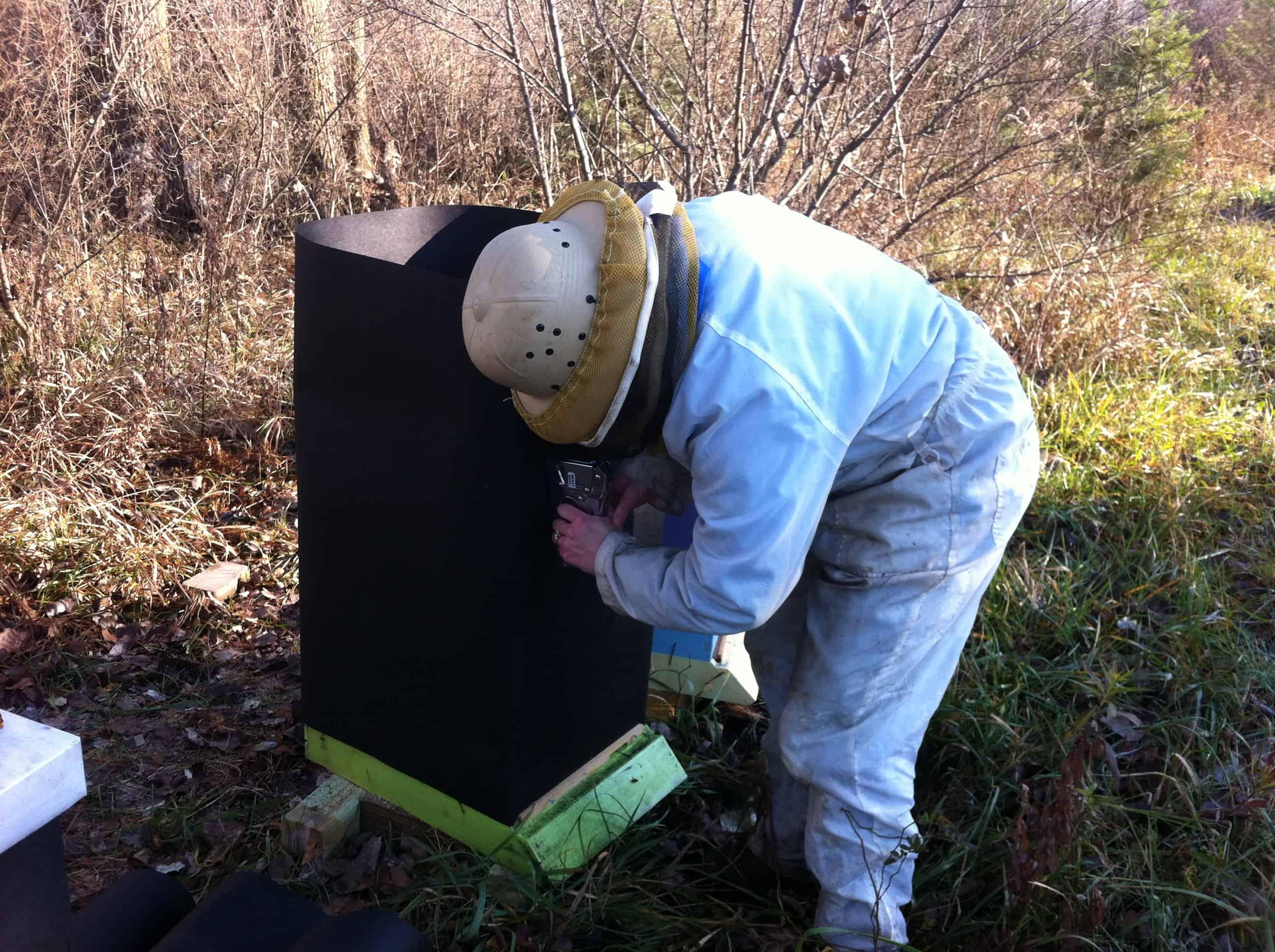 Wintering Bees in Michigan