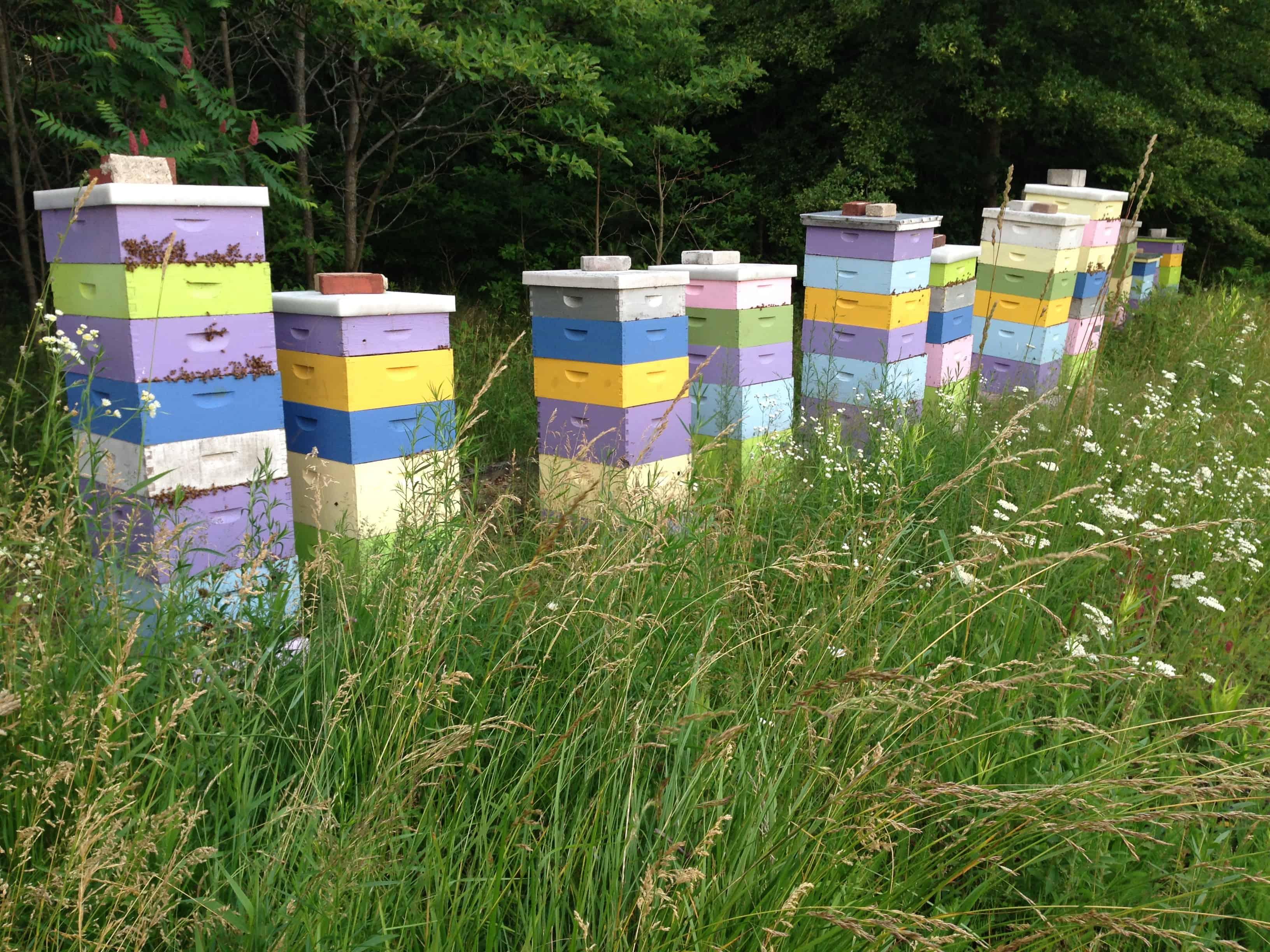 Super Crazy Bees!
