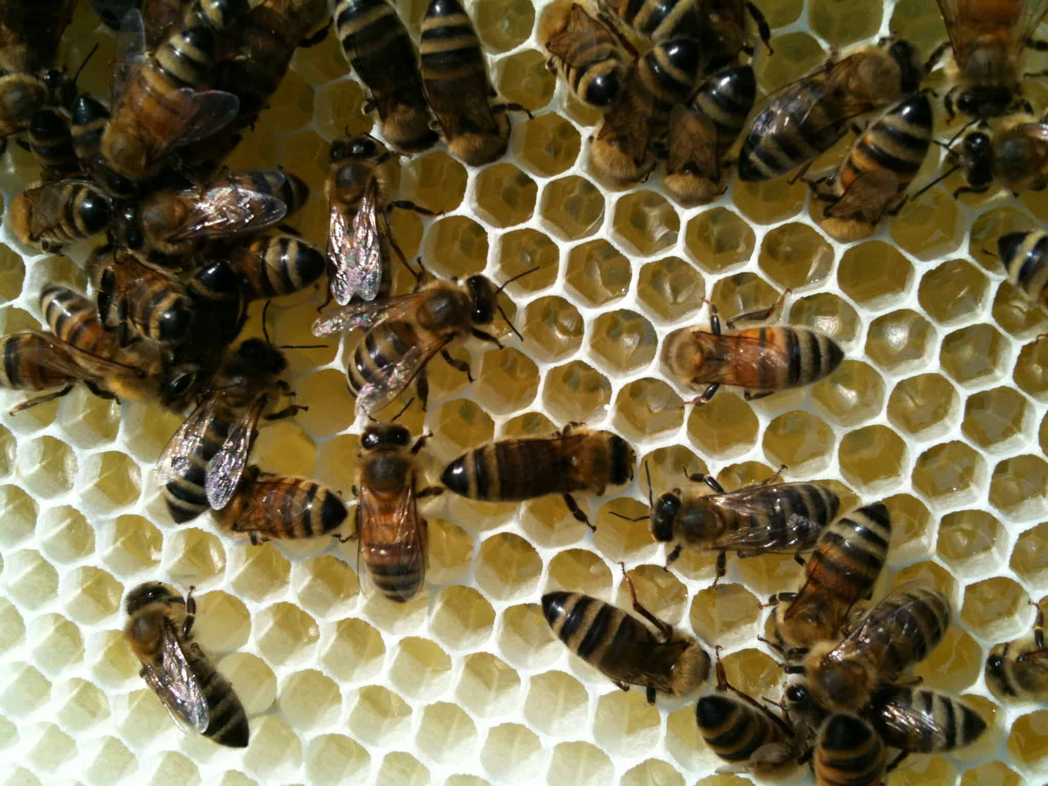 Tutorial (2): Scaling the Beekeeping Learning Curve