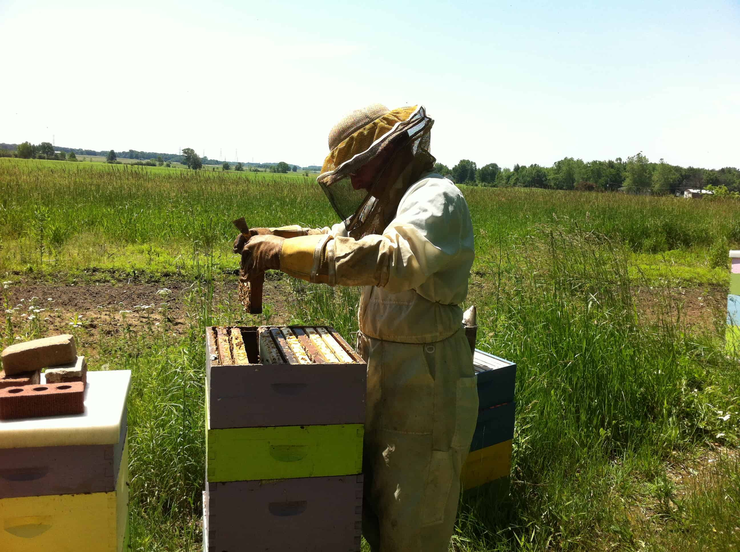 Tutorial (1): So you want to be a beekeeper?