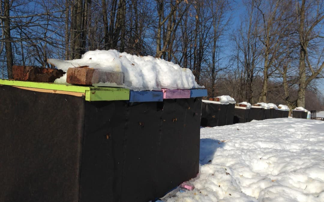What Bees Do in the Winter