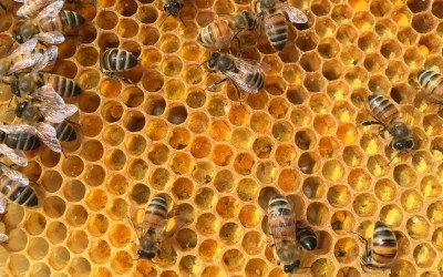 What Bees and Their Keepers Do in the Spring