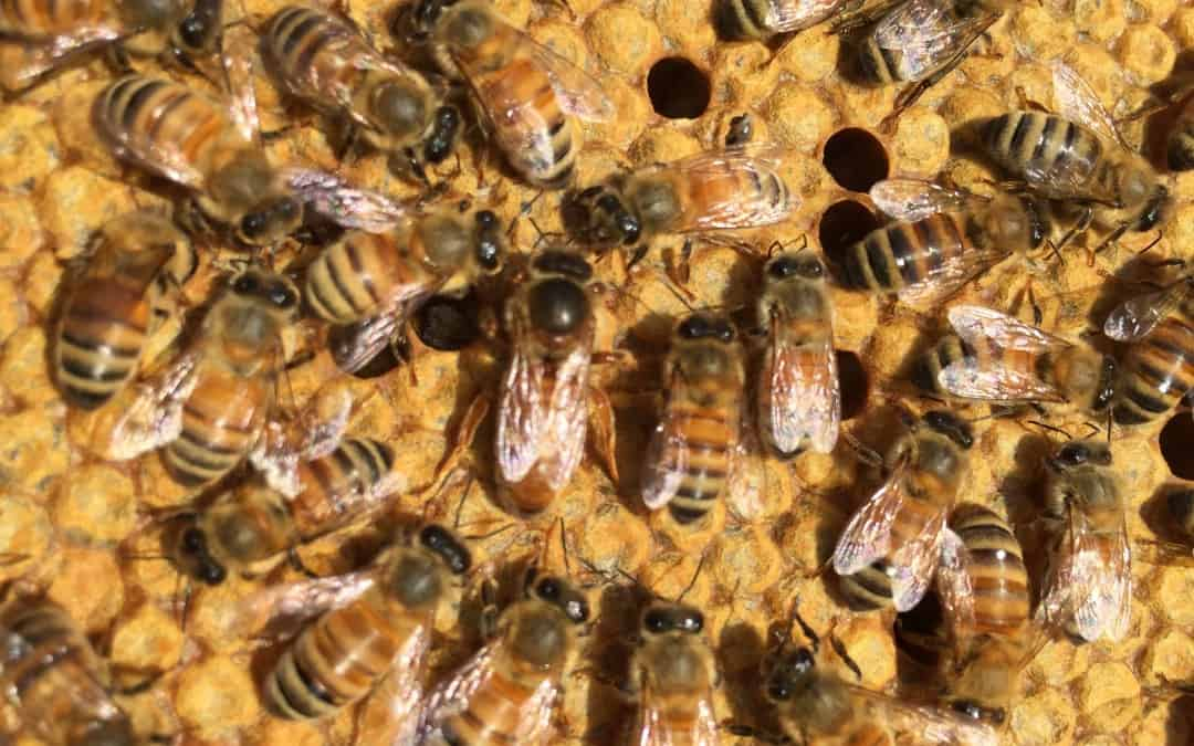 Small Scale Queen Rearing