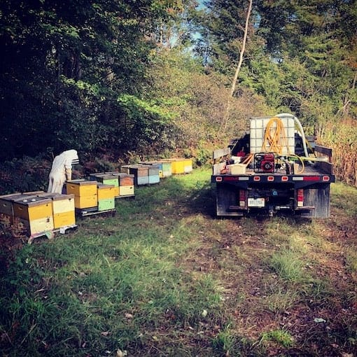 Feeding and treating bees