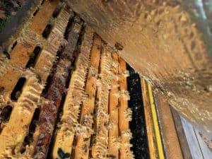 bottom side of inner cover is dry