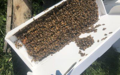 Wanna be a beekeeper?